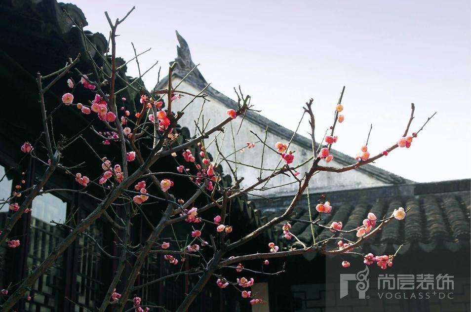 银丽高尔夫别墅装修业主院子中的花