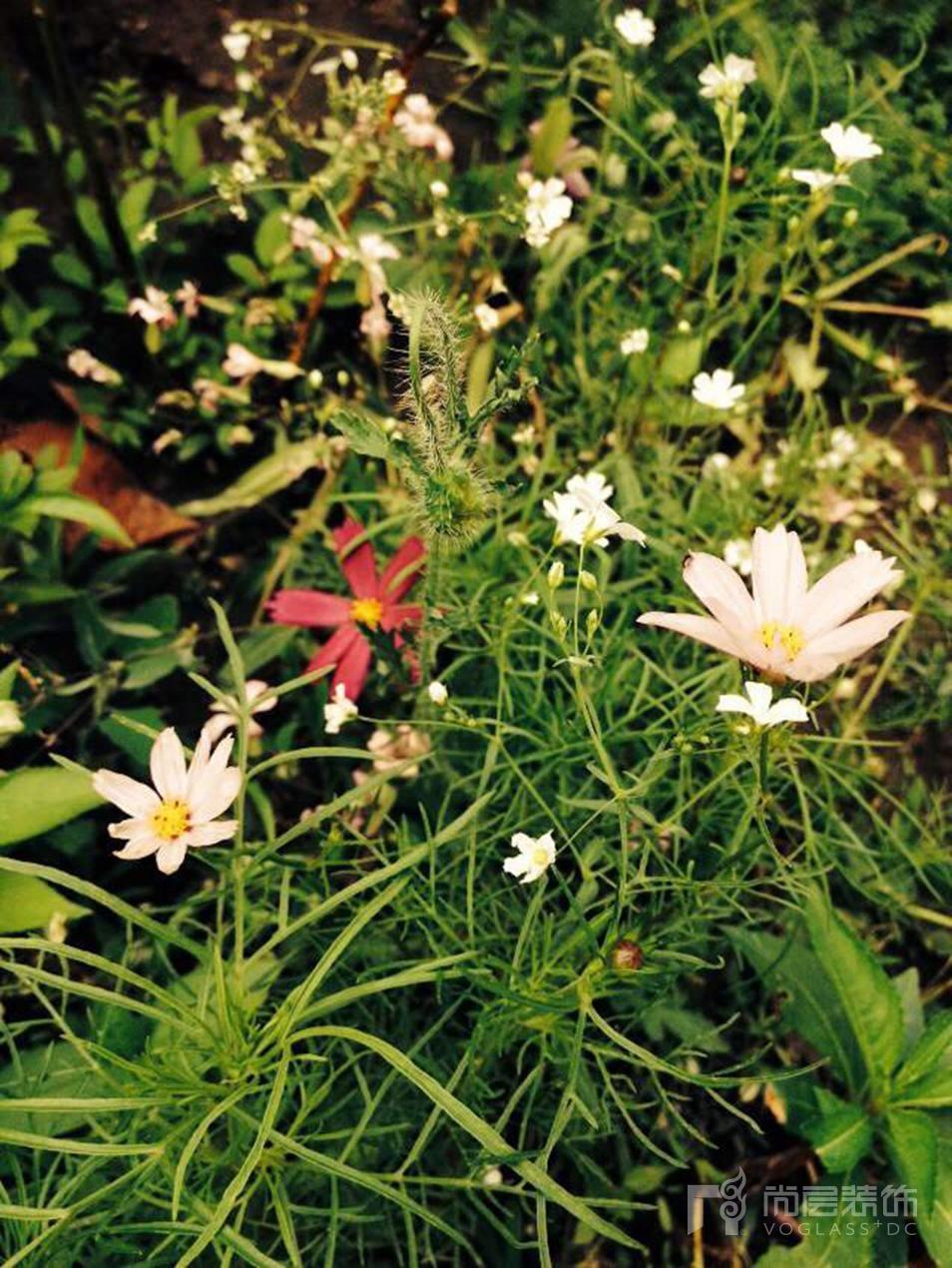 露露的花园